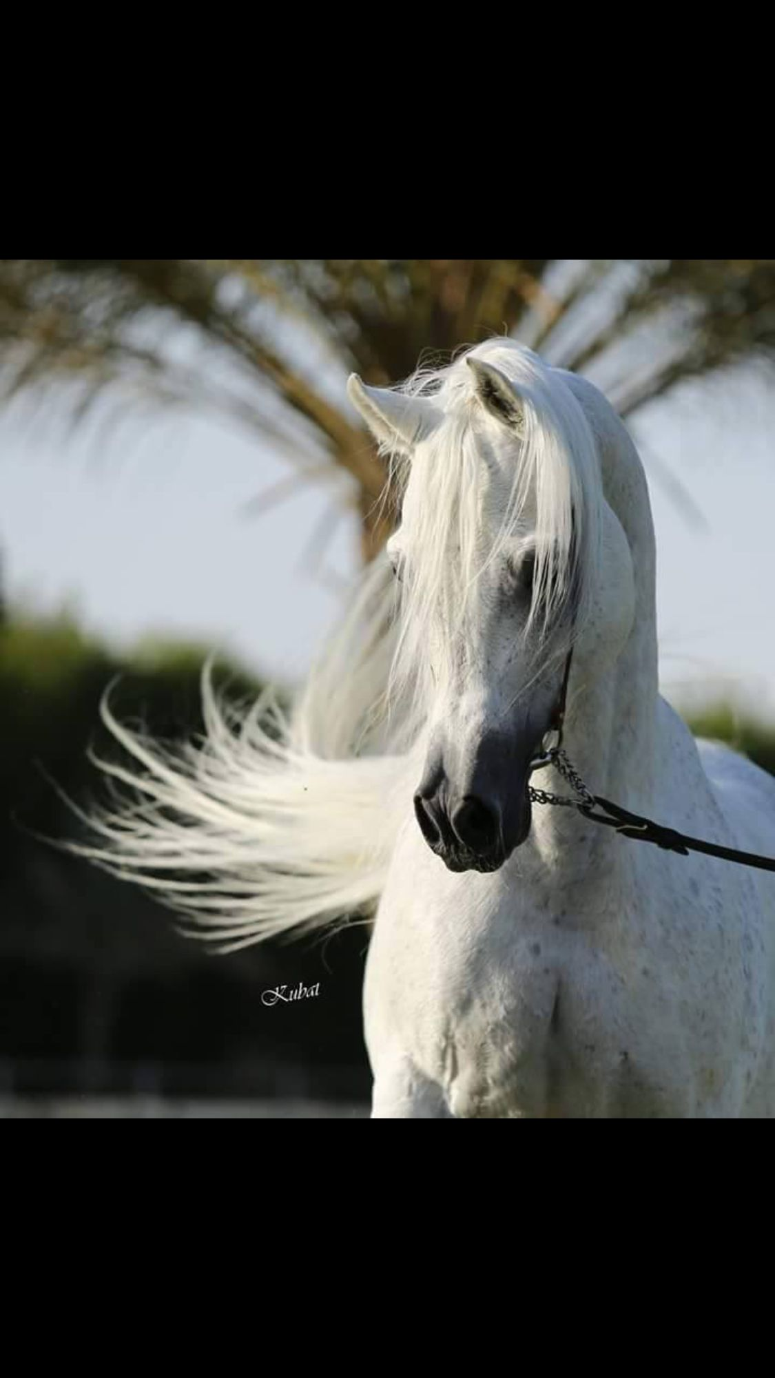 Pin By Clelia Lambir On My Entire World Revolves Around Them Beautiful Horses Horses Arabian Horse