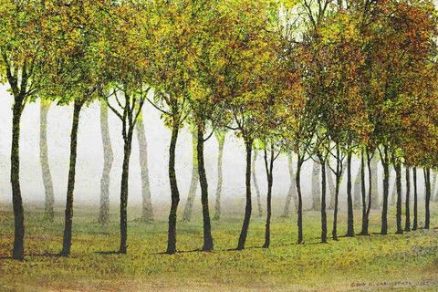 Row of Trees Green