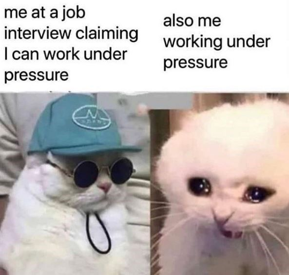 Chase The Time Away With Caturday (40 Cat Memes)