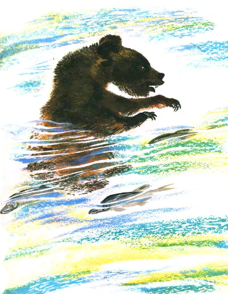 ещё иллюстрации к рассказам чарушина медвежонок здорового питания