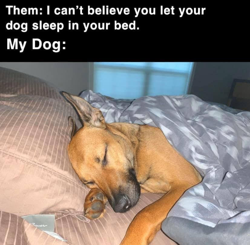 Pin By Rachael Handrinos On Pup Quotes Sleeping Dogs Funny Dogs Dogs Day Out