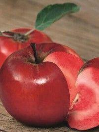 Pommier ' Redlove Circe'®