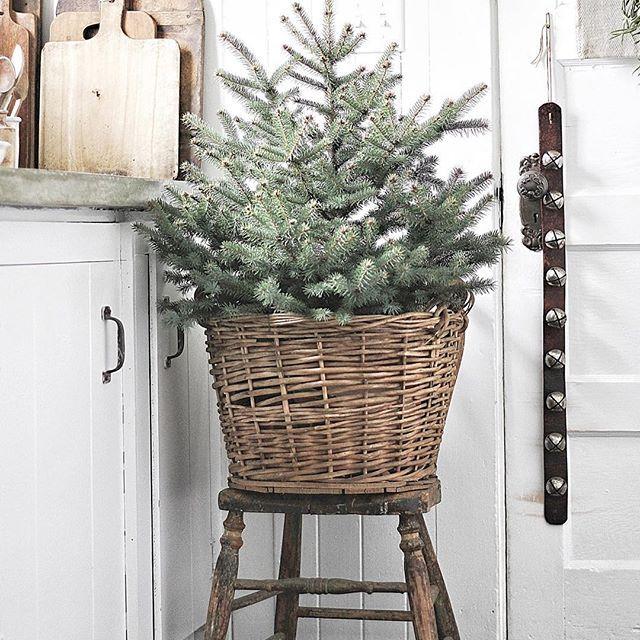 Pin by Tracy Resh Stewart on Christmas Pinterest Jingle bells