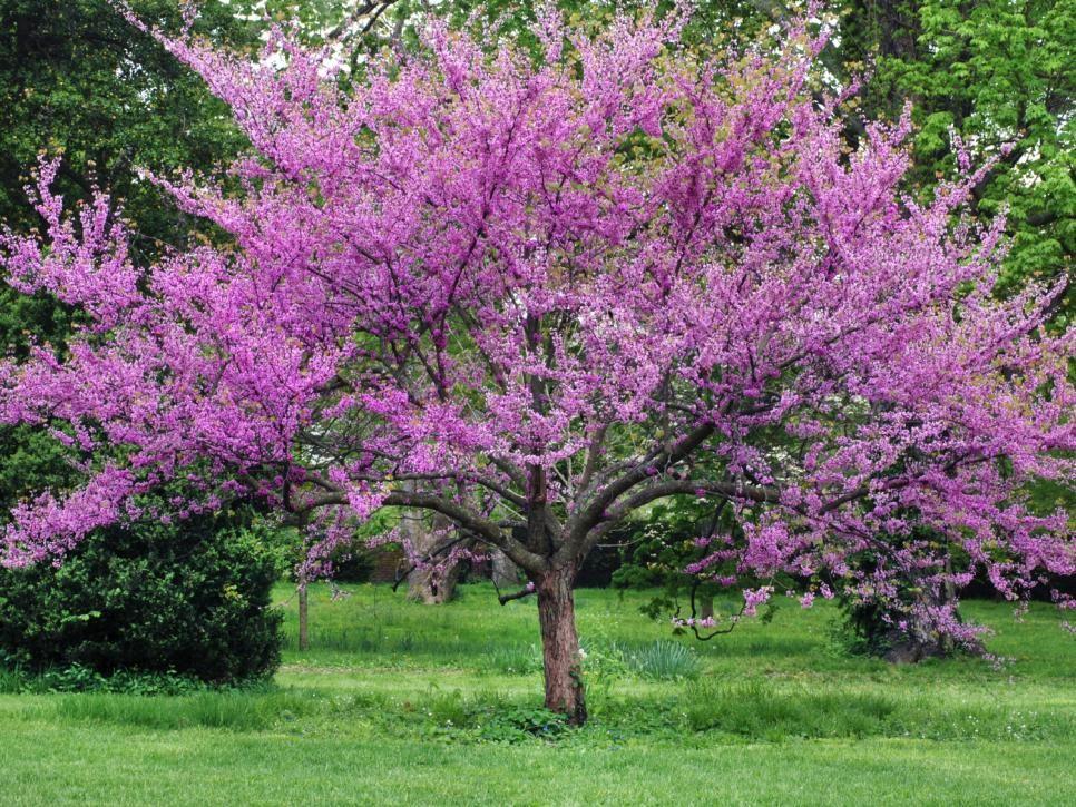12 Great Patio Trees