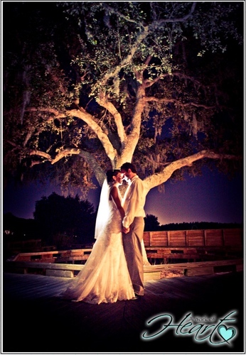 A Work of Heart Photography - Photographers - Tampa - Wedding.com