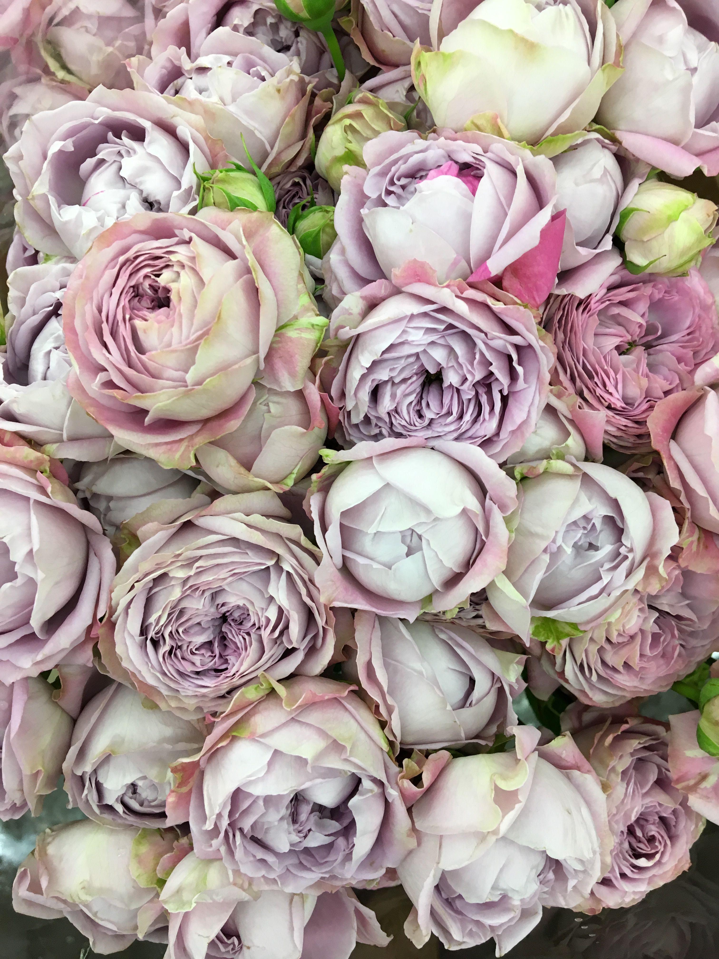 Нежнейшие пионовидные розы   Flores, Dioses griegos, Dioses