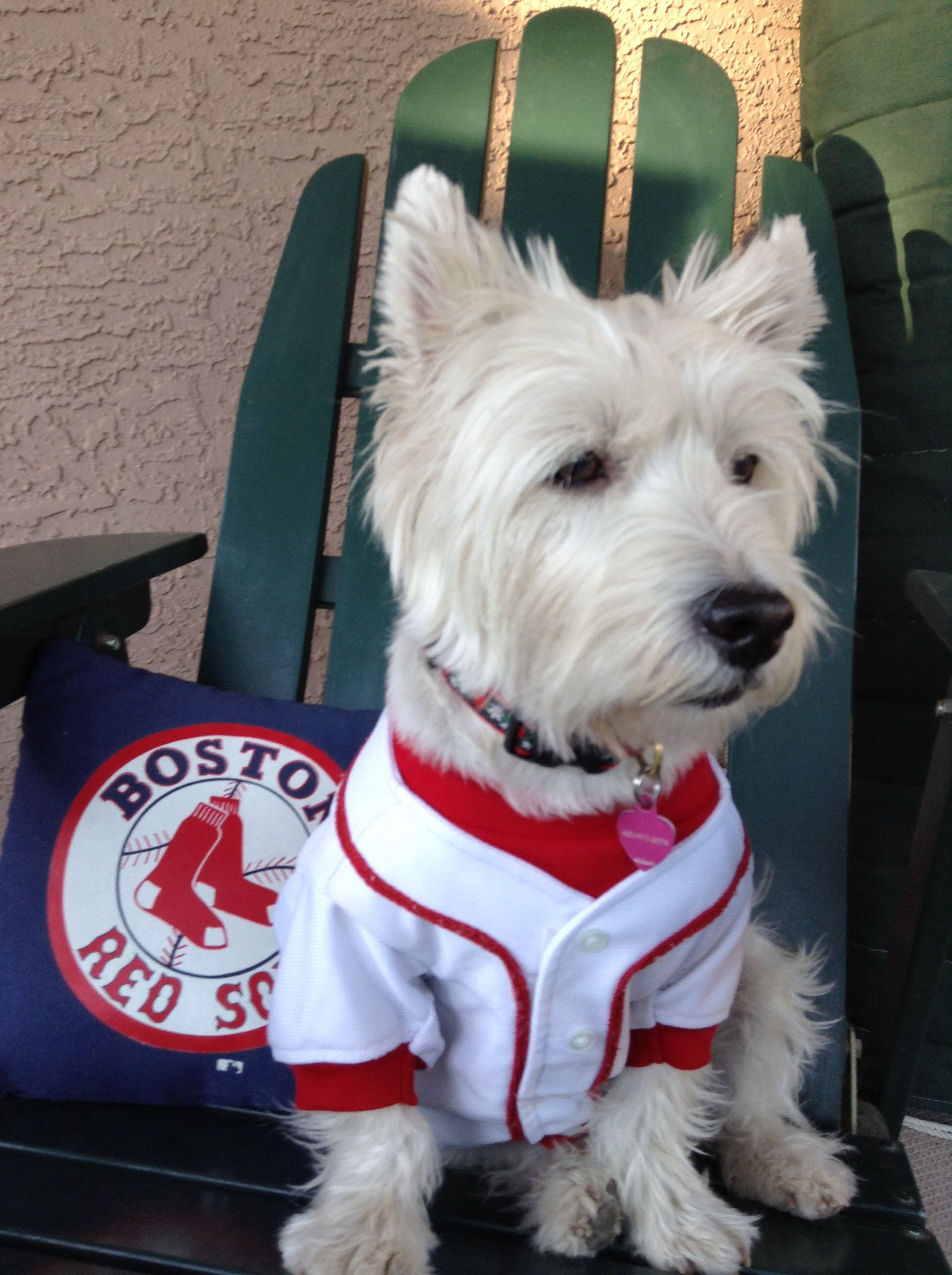 Go Red Sox Cutest Dog Ever Westies Furry Friend