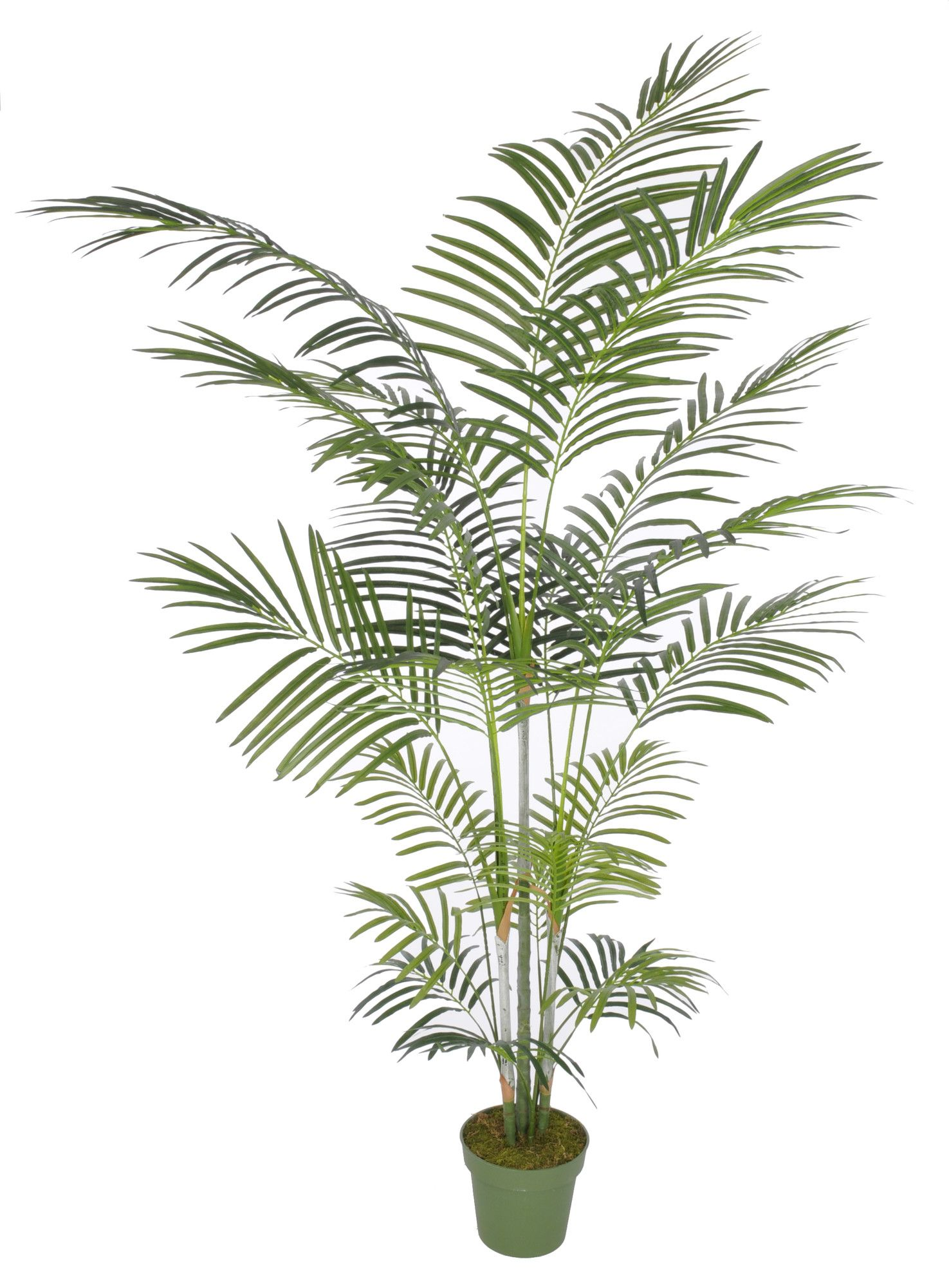 House of silk flowers artificial areca palm tree reviews house of silk flowers artificial areca palm tree reviews wayfair dhlflorist Gallery