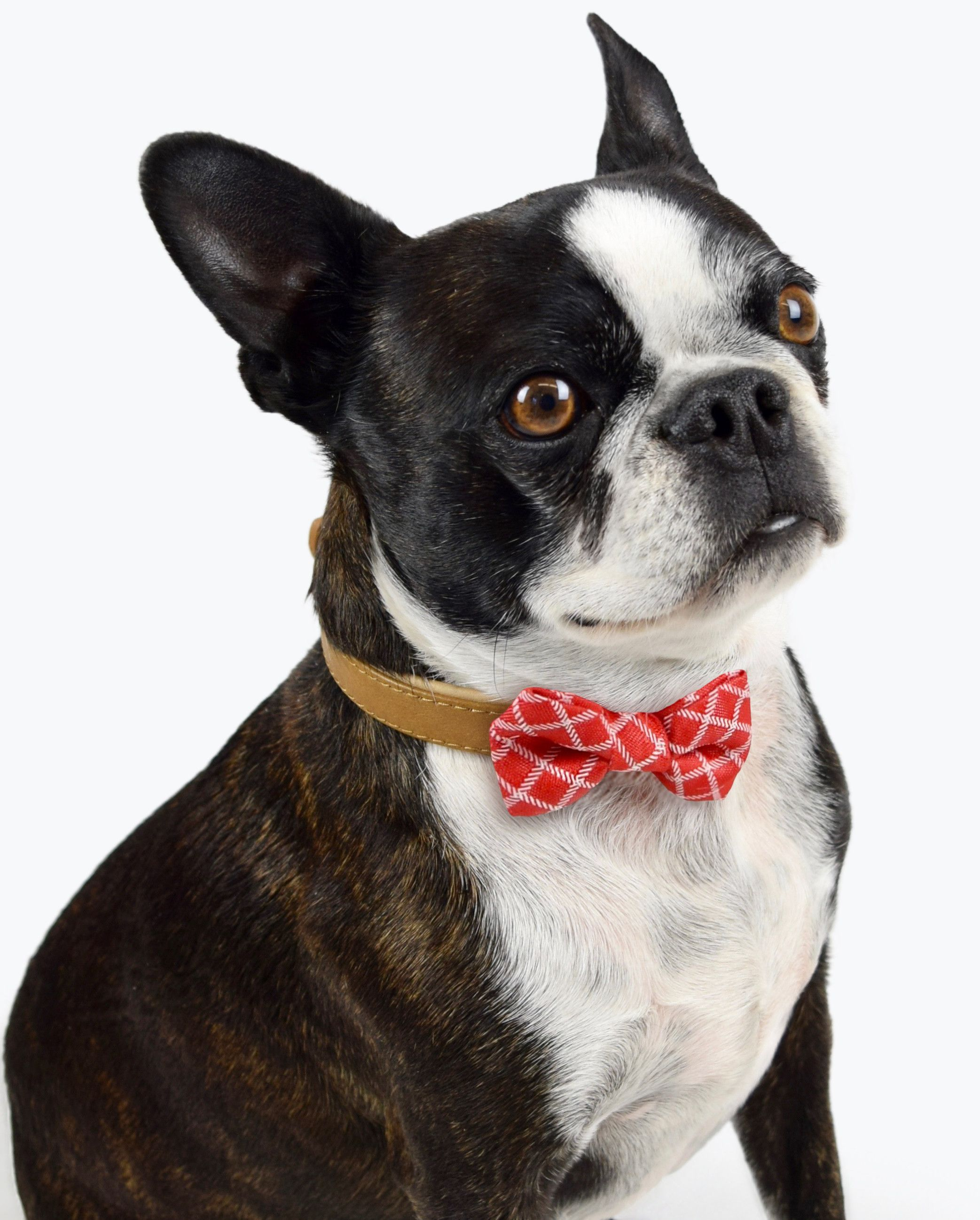 Martha S Expanded Her Amazon Store And We Want It All Boston Terrier Boston Terrier Funny Pets