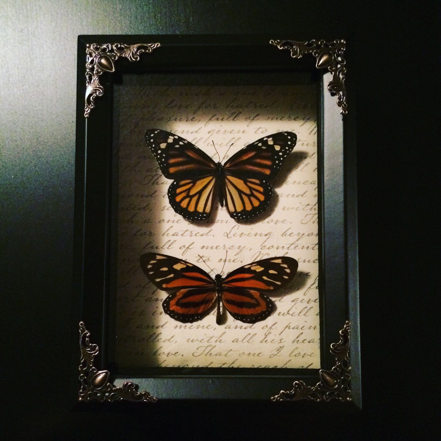 Mounted monarch tropical milkweed butterfly shadow box