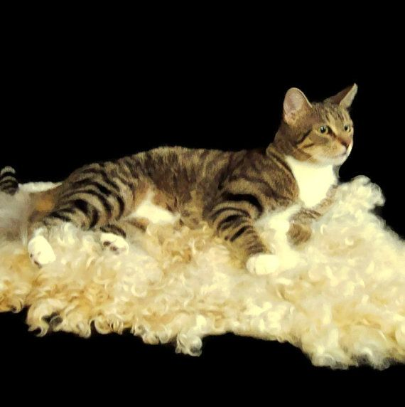 Cat Bed Wool Fleece Cruelty Free Felted Rug Cotswold And Alpaca Supporting Us Small Farms Cat Bed Knitted Cat Pet Gifts