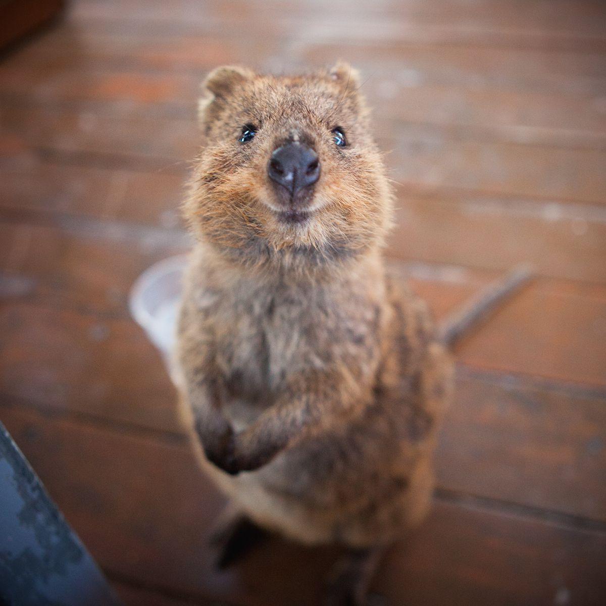 Australia Trip On Behance Gatos Animais Caes