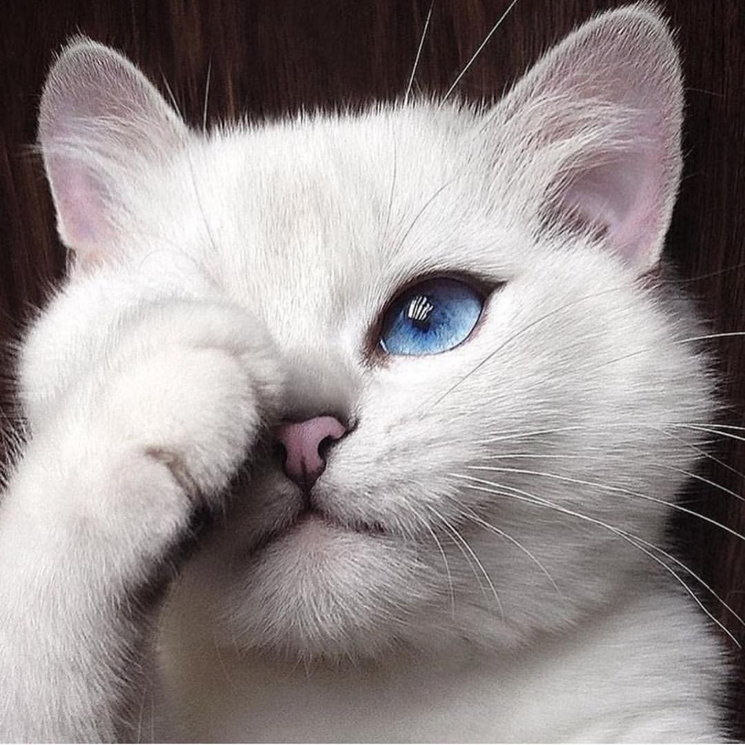 "CHIQUE LE FRIQUE på Instagram: ""MEOW via stylish @STYLESTUDIO  Tag a cat lover❤️"""