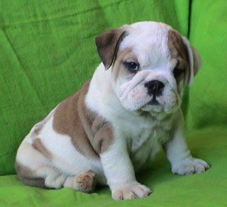 Will Soon Be A New Addition To The Turner Clan Someday Bulldog