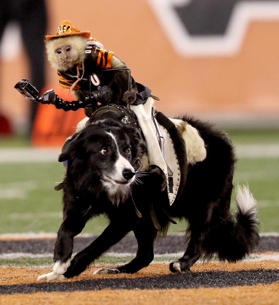 3737e13455be40 Team Ghost Riders provided the entertainment during half time of the Bengals  and Texans game at Paul Brown Stadium Monday November 16, 2015.