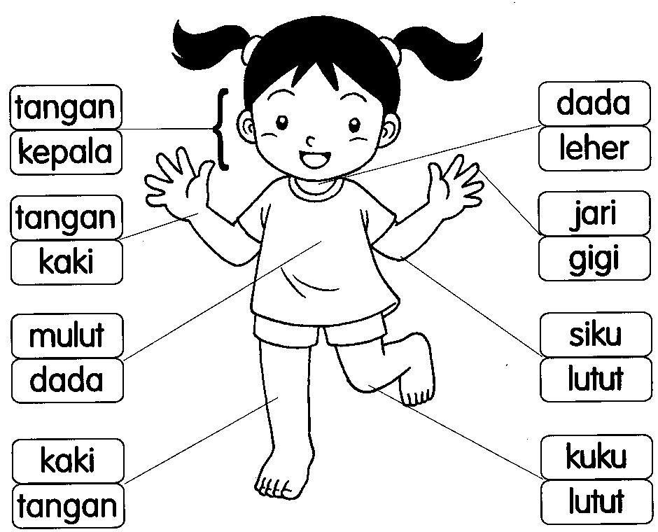 Bahasa Malaysia Prasekolah Latihan Badan Education Gambar Mewarnai Anggota