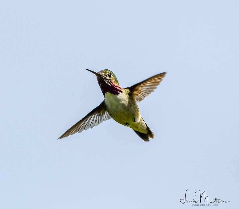 Louis On Instagram This Hummingbird Is In Flight It Is Not Hovering Moving As Quickly As Hummingbirds Do About 20ft In Front And Abov Instagram Louis Hover