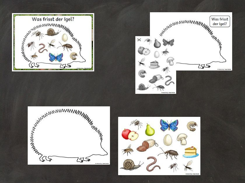 grundschule material kostenlos arbeitsbl tter igel pinterest school teaching und crafts. Black Bedroom Furniture Sets. Home Design Ideas