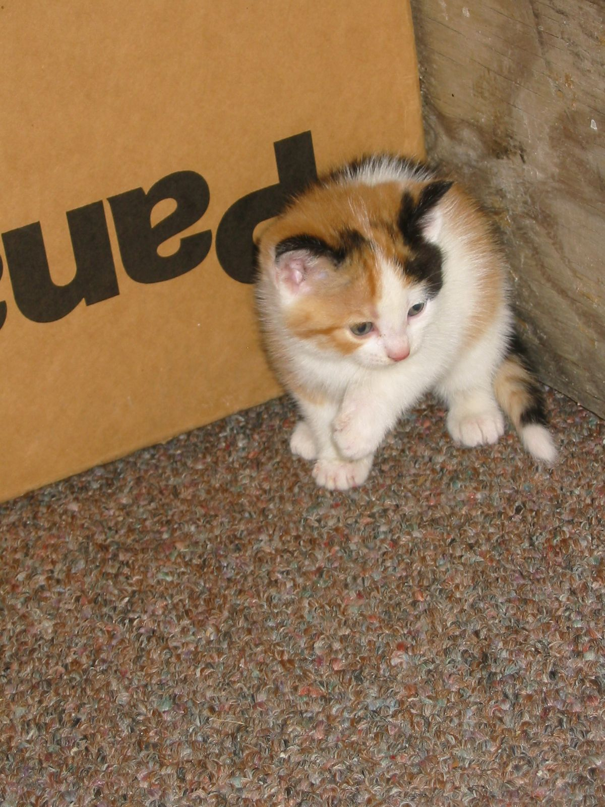 'Alice' in Oct. 2007, just a few weeks old... the feeling of being cornered in a big world. What to do...what to do...