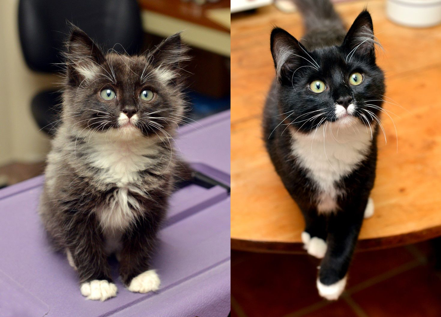 My Friend S Cat As A Kitten And All Grown Up Cute Cats And Dogs Cat Care Cats