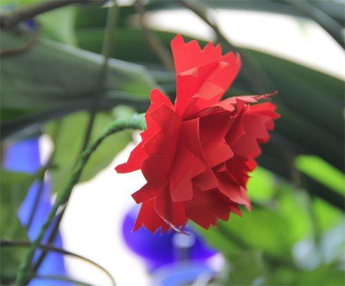 Papierowy Gozdzik Flowers Rose Plants