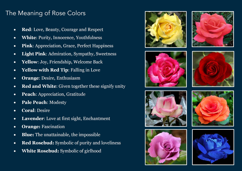 rose color meanings Buffalo Wedding Florist Buffalo