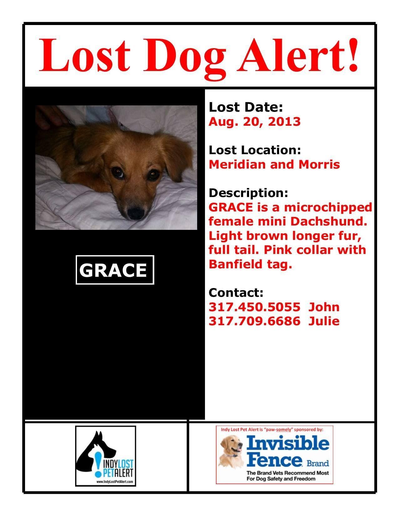 Indianapolis In Lostdog 8 20 13 Meridian And Morris Female Mini Dachshund Light Brown Longer Fur 317 450 5055 Http Losing A Dog Mini Dachshund Losing A Pet