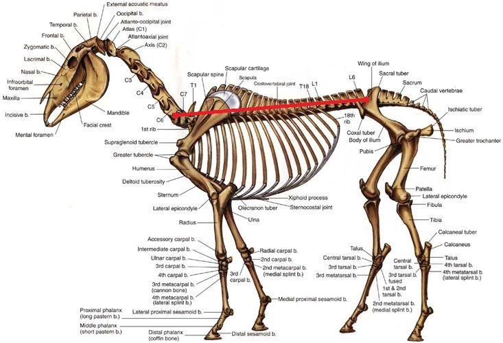 Primitive Markings Horse Google Search Horses Pinterest