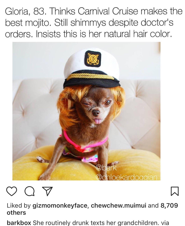 Pin by sue shepherd on sooooo funny pinterest dog memes and