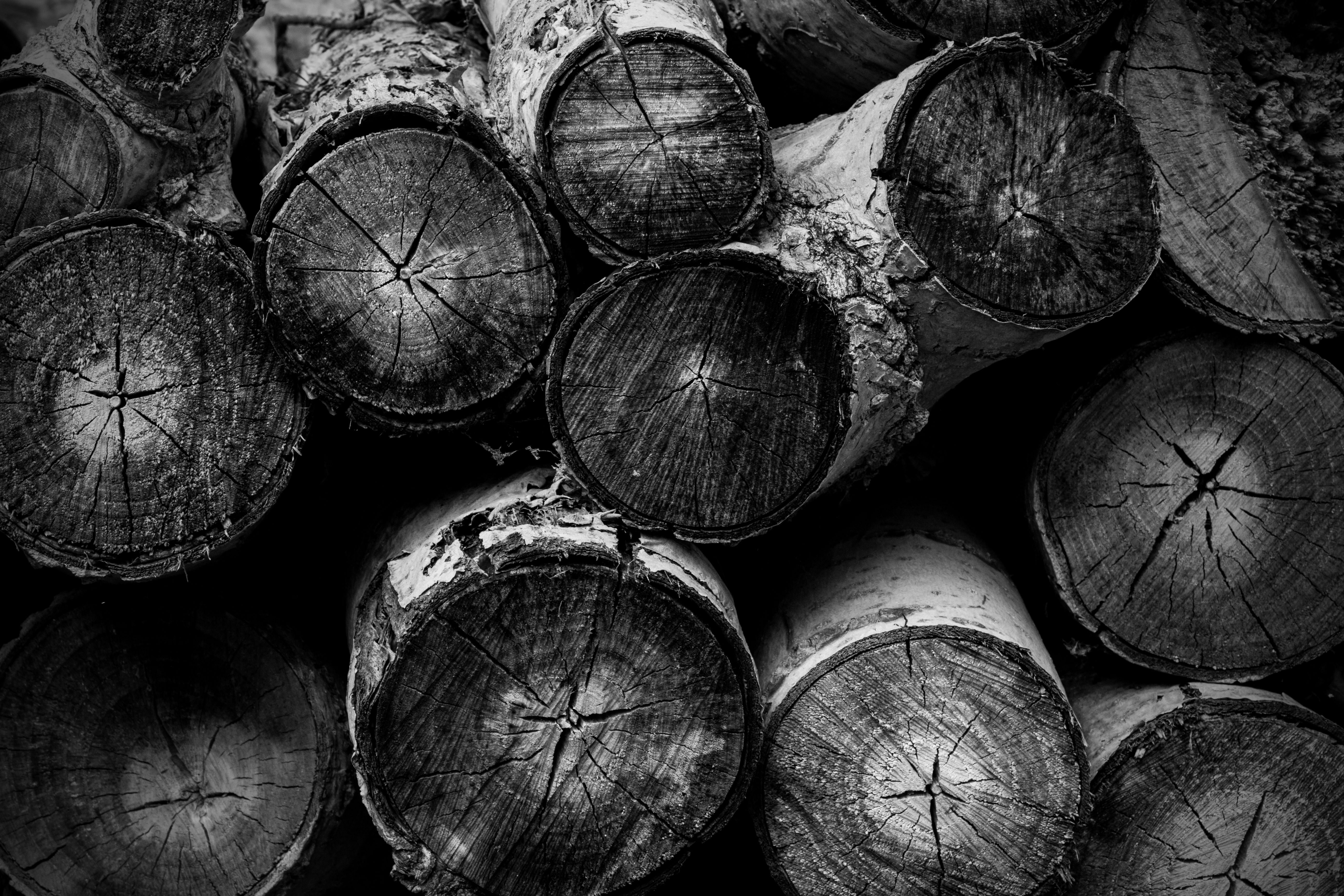 pacing leopard abstracts wood pile | abstract photography