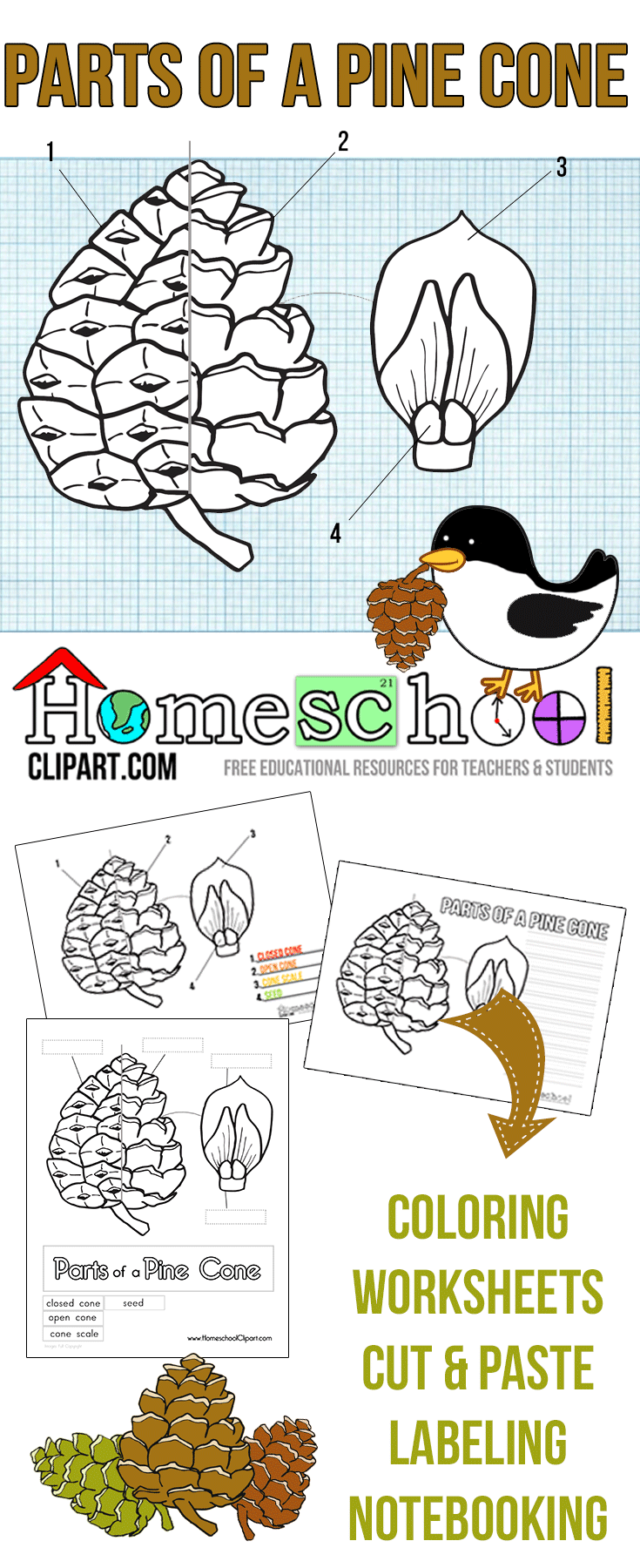 Free Parts of a Pine Cone Science Printables. Great for a hands on ...