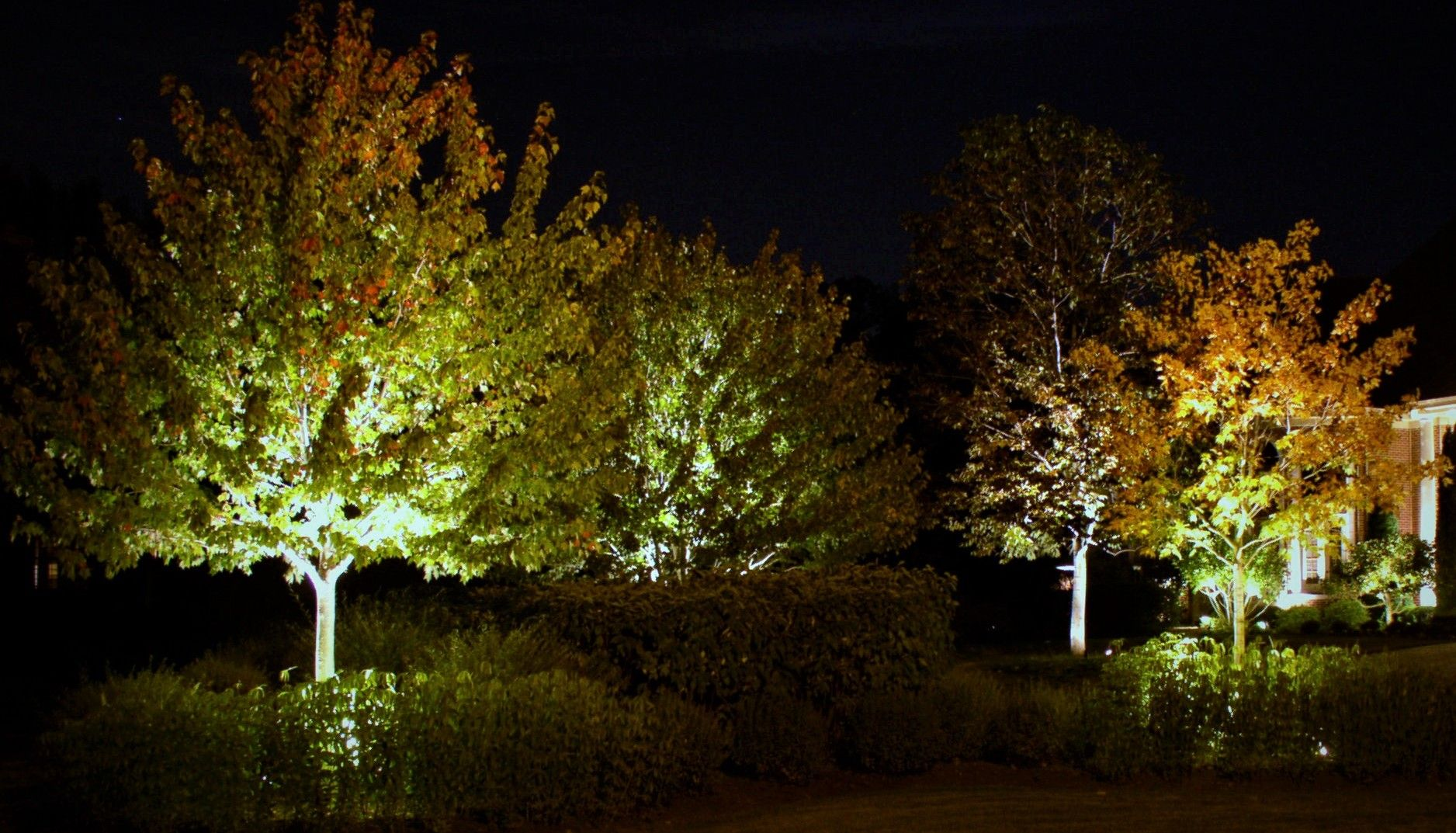 Pin by the illuminators outdoor lighting on landscape lighting group of trees being illuminated with out door lighting aloadofball Images