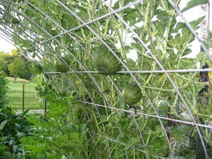 Image Result For Backyard Vegetable Garden Bird Net