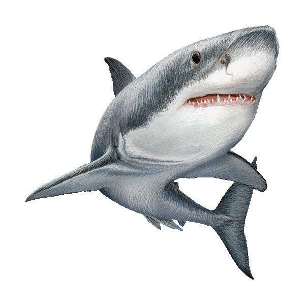 An item on Polyvore   animales   Pinterest   Tiburones, Tatuajes y ...