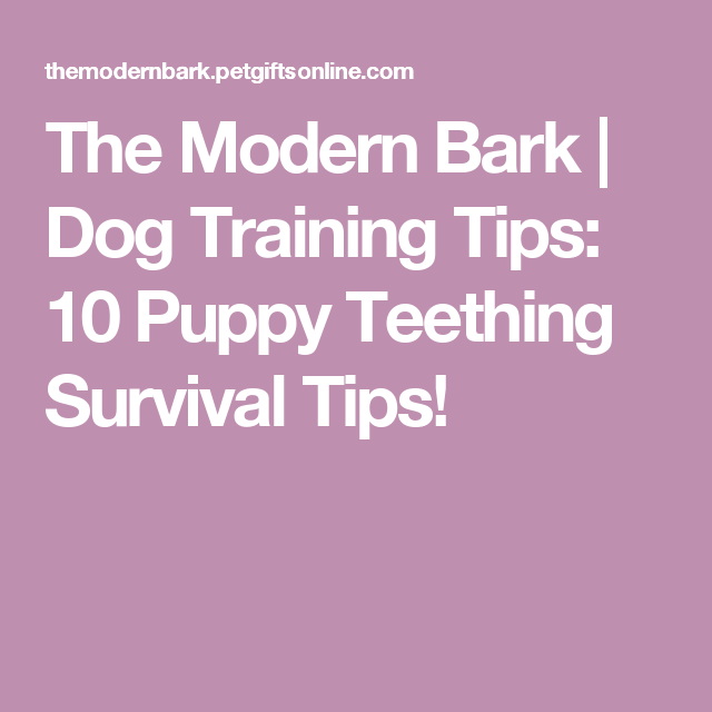 10 Puppy Teething Training Tips and Remedies Puppy