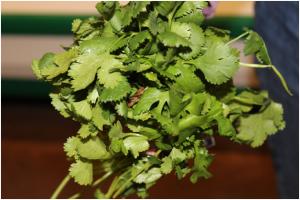 Plant Diseases of Cilantro