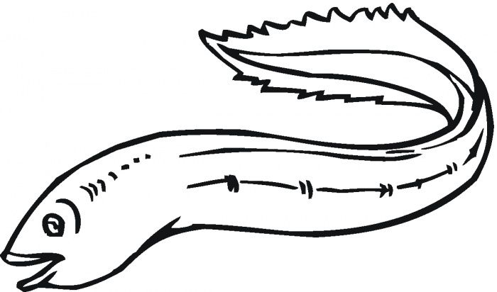 Sea Eel 2 Coloring Pages Free Printable Coloring Pages
