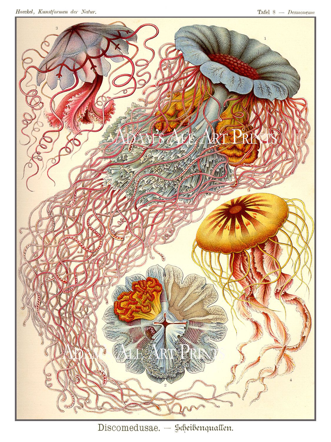 Ernst haeckel jellyfish print or poster ethereal jellyfish wall art