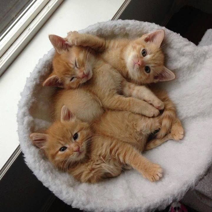 Look What I Found In The Barn Their Mama Is Keeping Them Warm But I Made Them A Small Warm Apartment To Help Mr M Kittens Cutest Cute Cats Cute Baby