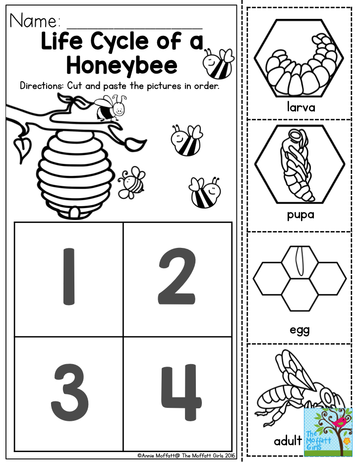 Life Cycle of a Honeybee Preschoolers love learning about how – Ladybug Life Cycle Worksheet