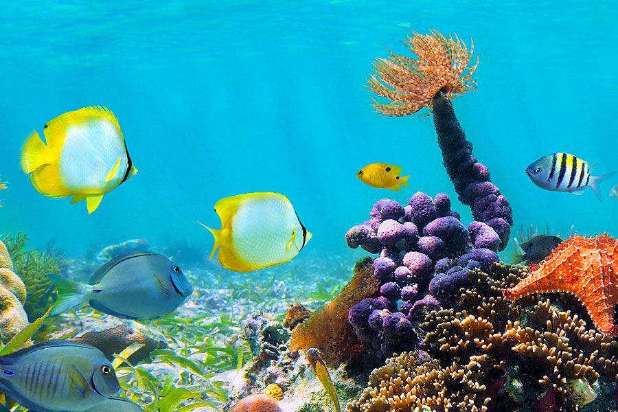 Coral Reefs Remix Of Coral Reef By Heart Thinglink Coral Reef Pictures Fish Wallpaper Coral Reef