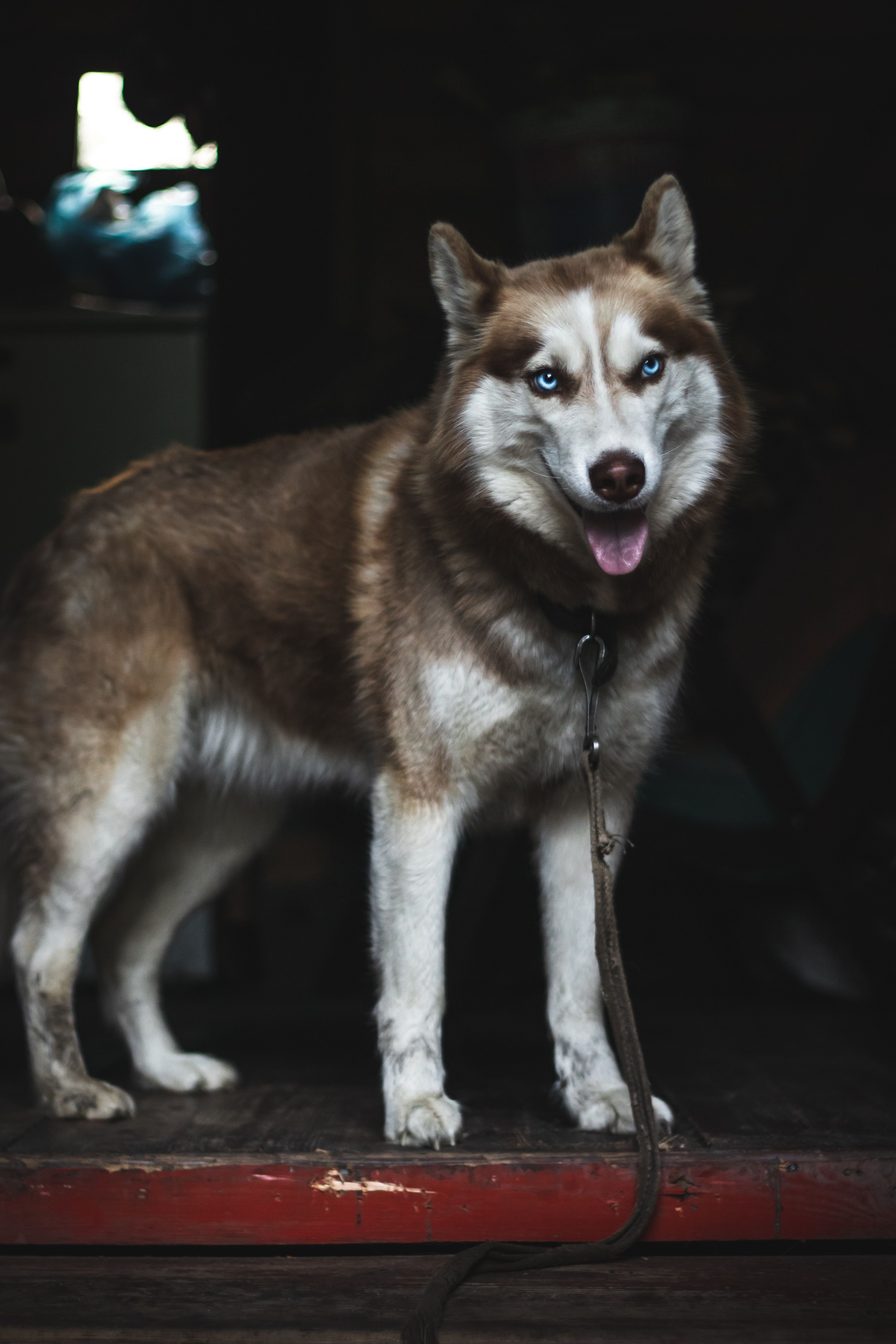Top 5 Best Dog Training Collar In 2020 Dog Collars Girly