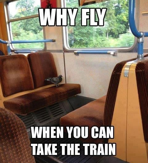 Pigeon Taking a Ride On a Train