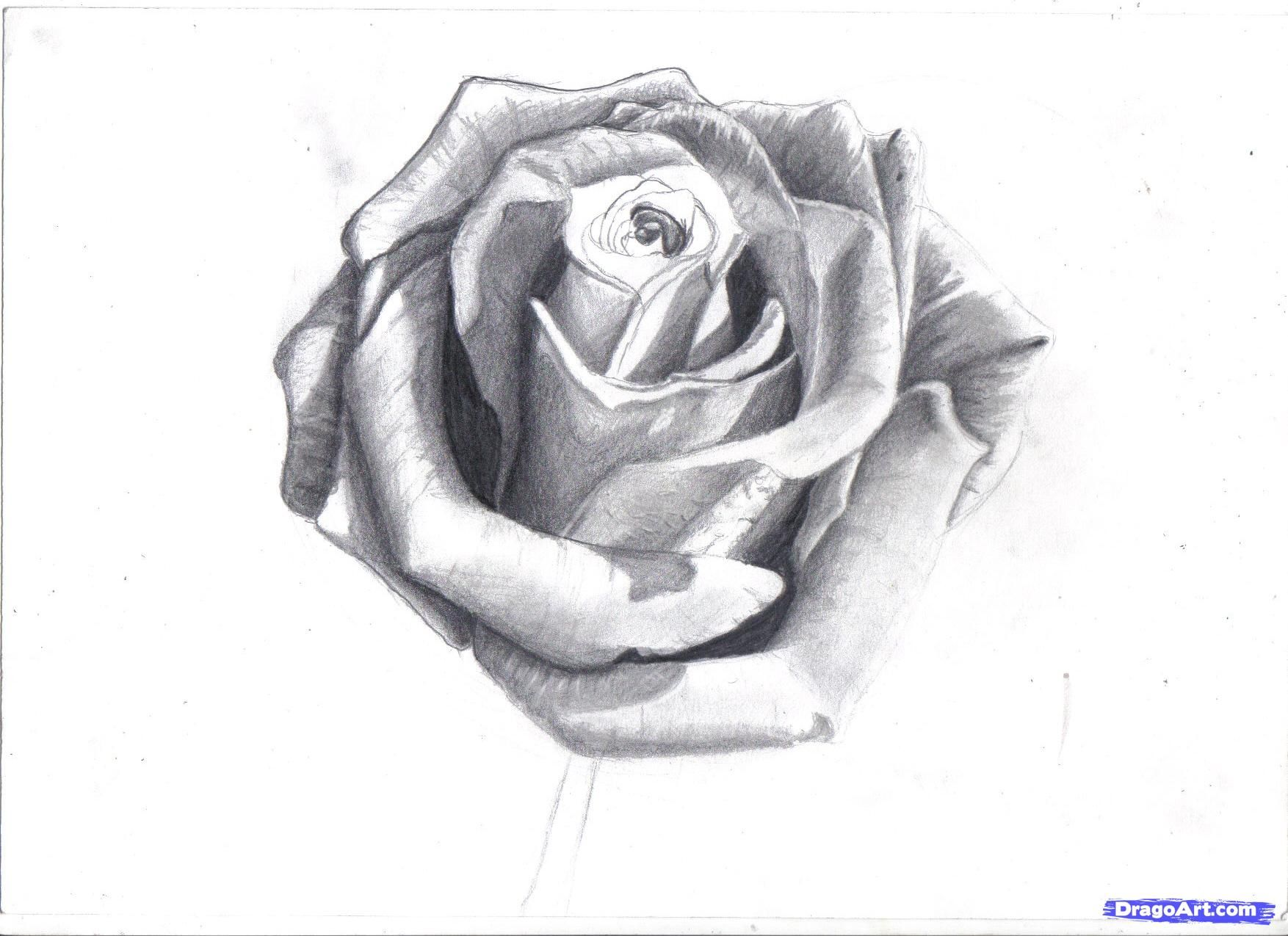 how to draw a rose in pencil, draw a realistic rose step ...