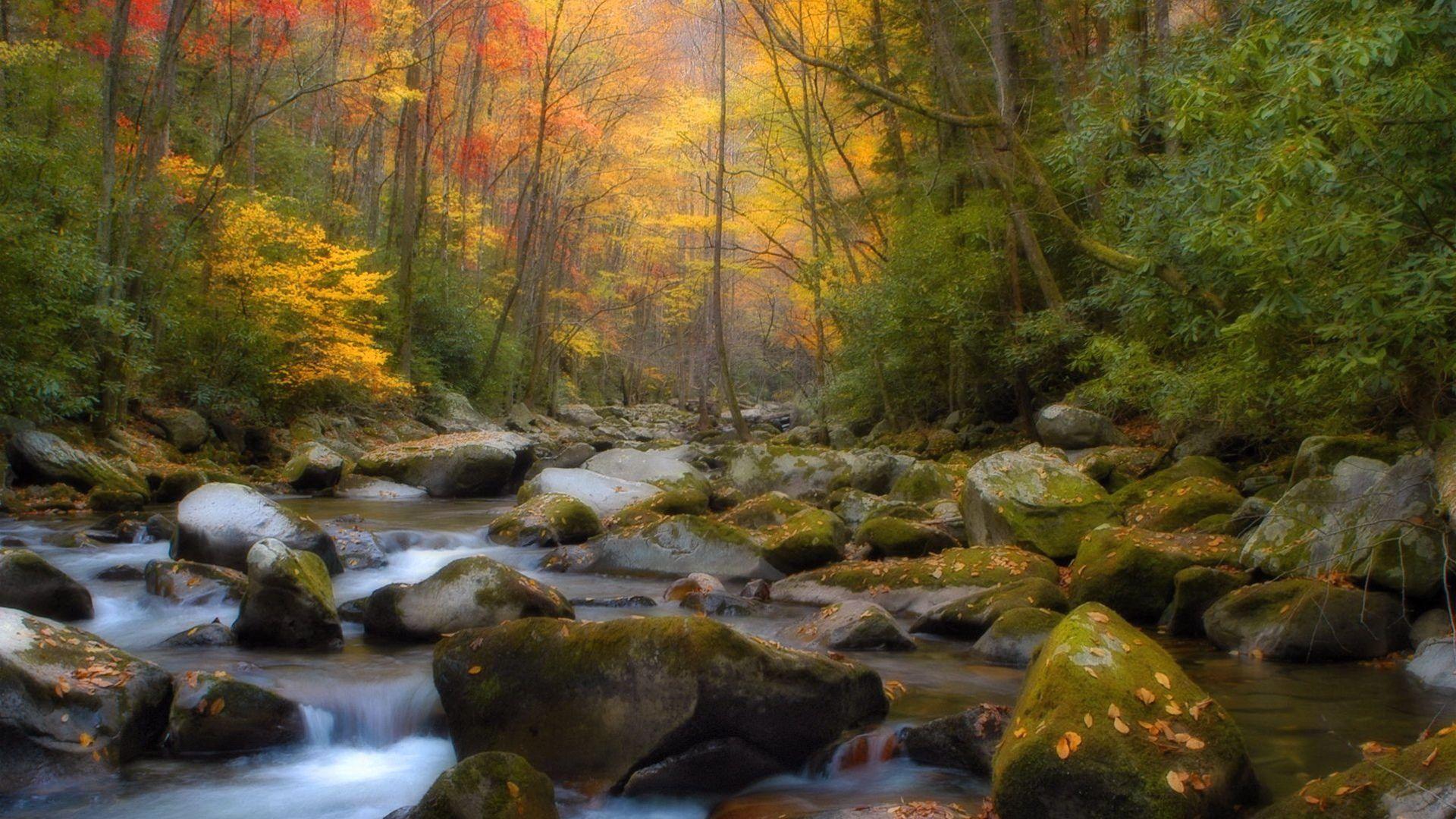 wallpaper spring 23 1080p - photo #2