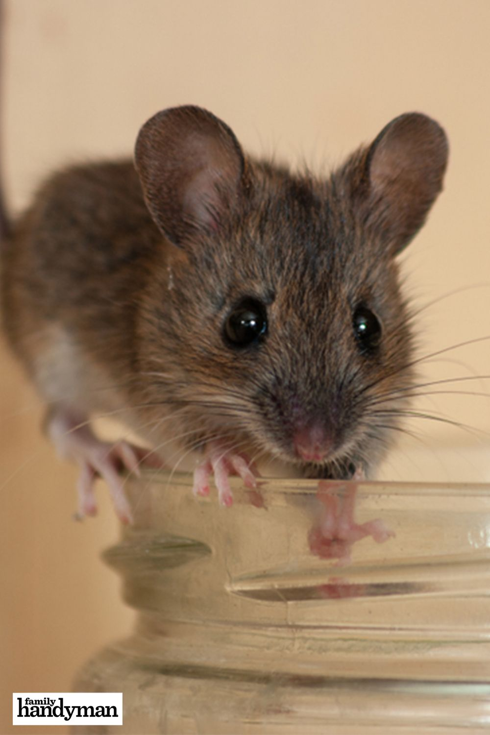 How To Get Rid Of Mice In Your House In 2020 Getting Rid Of Mice