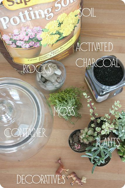 activated charcoal walmart plants
