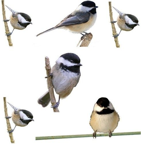 My little chickadees vinyl decals for walls or by wilsongraphics