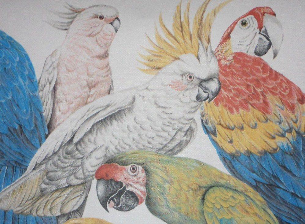 Parrots Cockatoo Wallpaper Borders Vintage Tropical Bird
