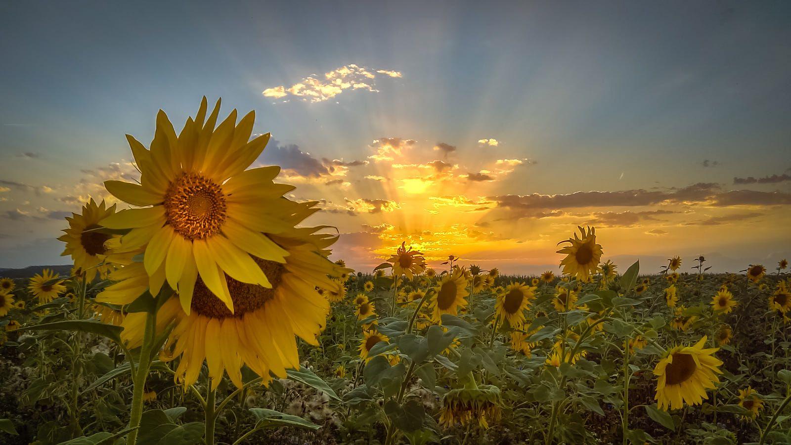 Sunfields Garden By Ralf Thomas On 500px Garden Cool